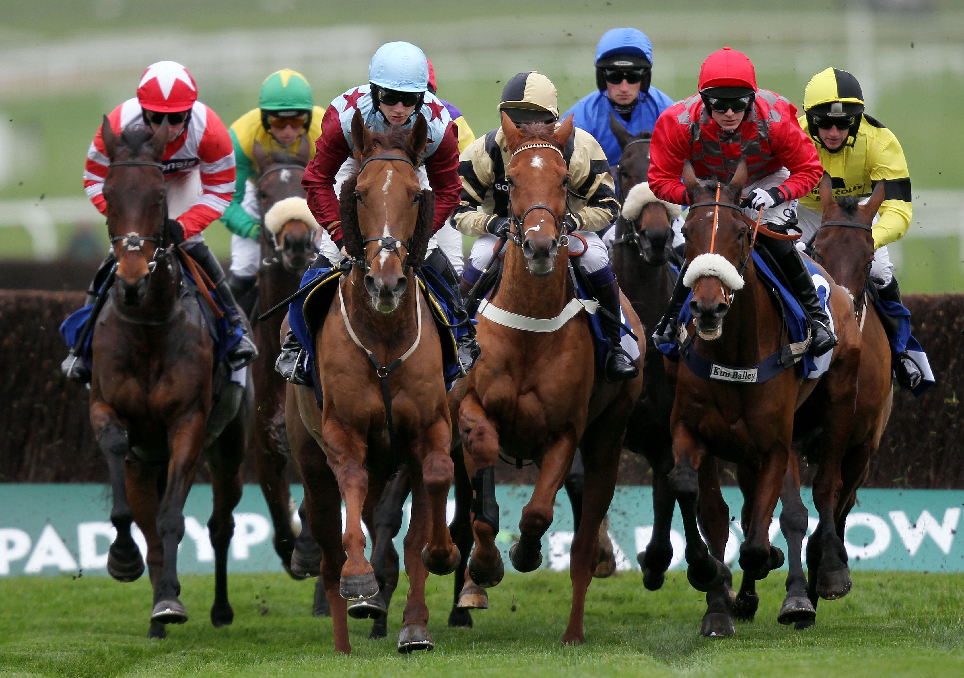 Increase Your Odds Of Winning On Horse Racing