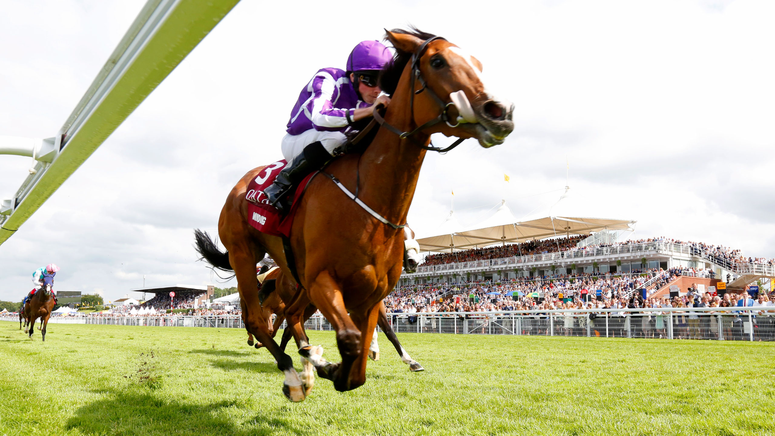 Thoroughbred Racing Statistics - Make Your Chance Strong Of Winning Horse Race
